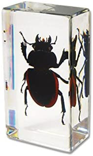 Stag Beetle Resin Paperweight